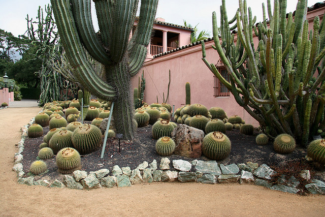 Cacti and euphorbia garden_Lotusland_santa_barbara_california